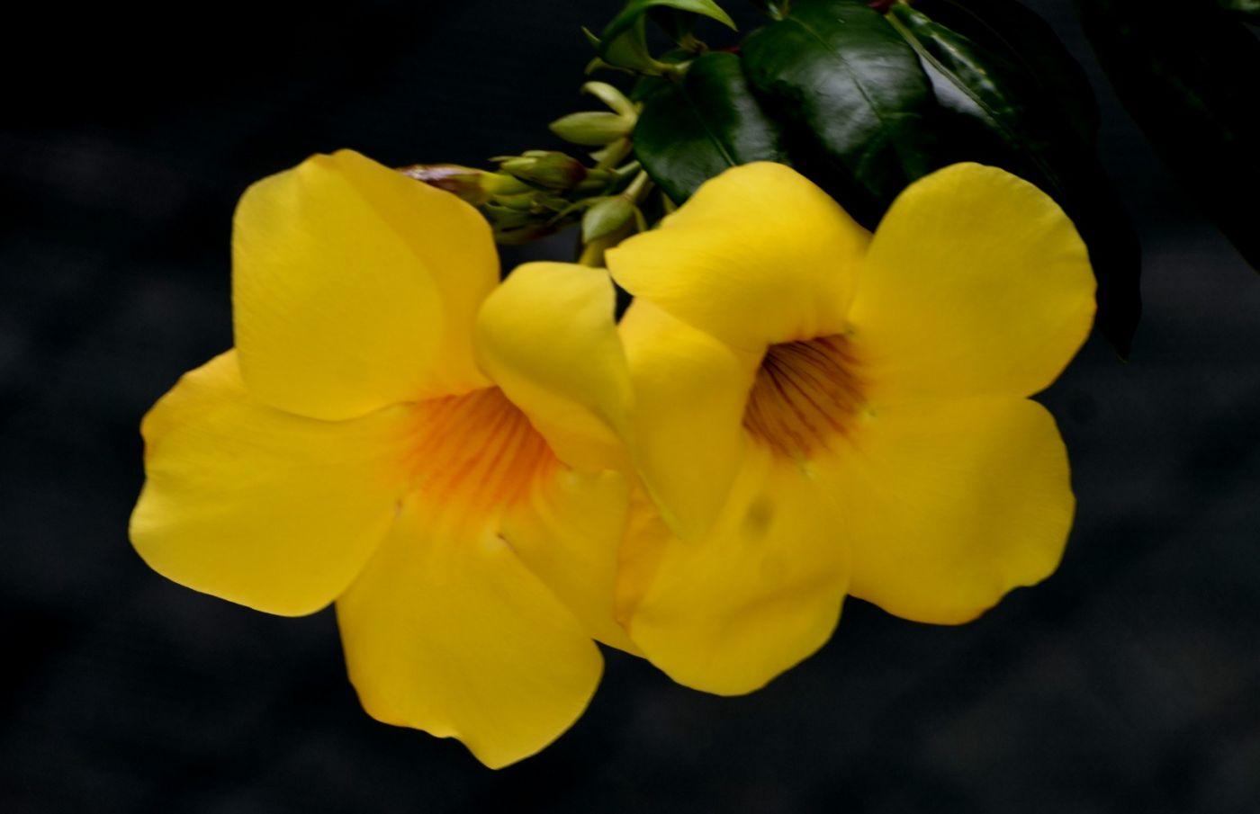黄蝉和白蝉_图1-10