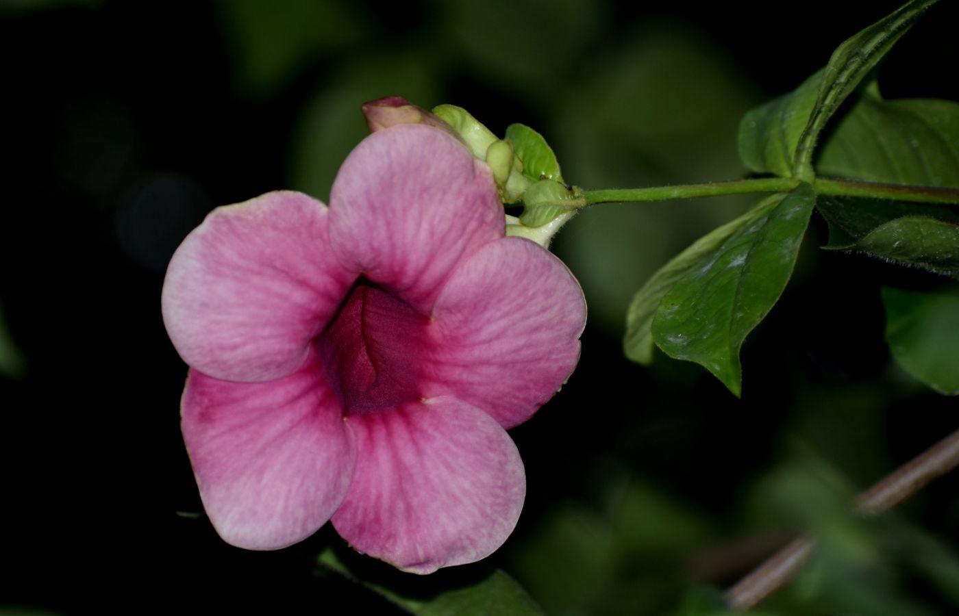 紫蝉和红蝉_图1-4