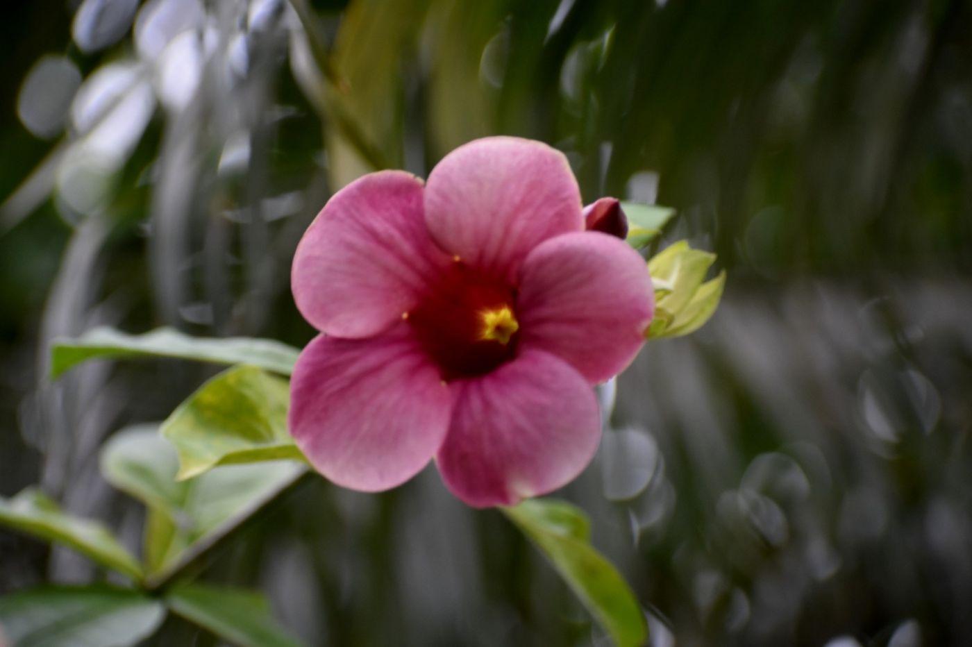 紫蝉和红蝉_图1-5