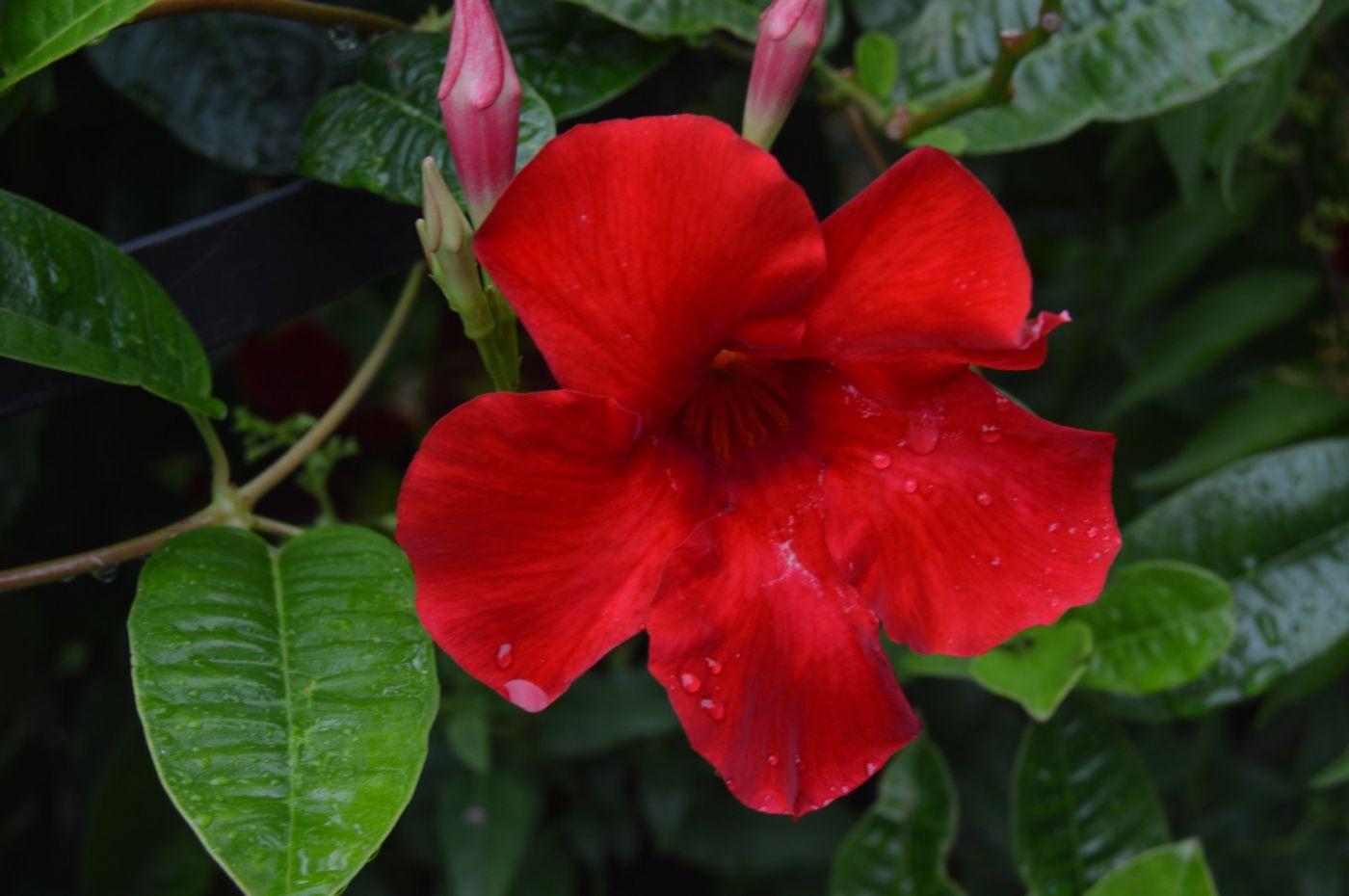 紫蝉和红蝉_图1-20