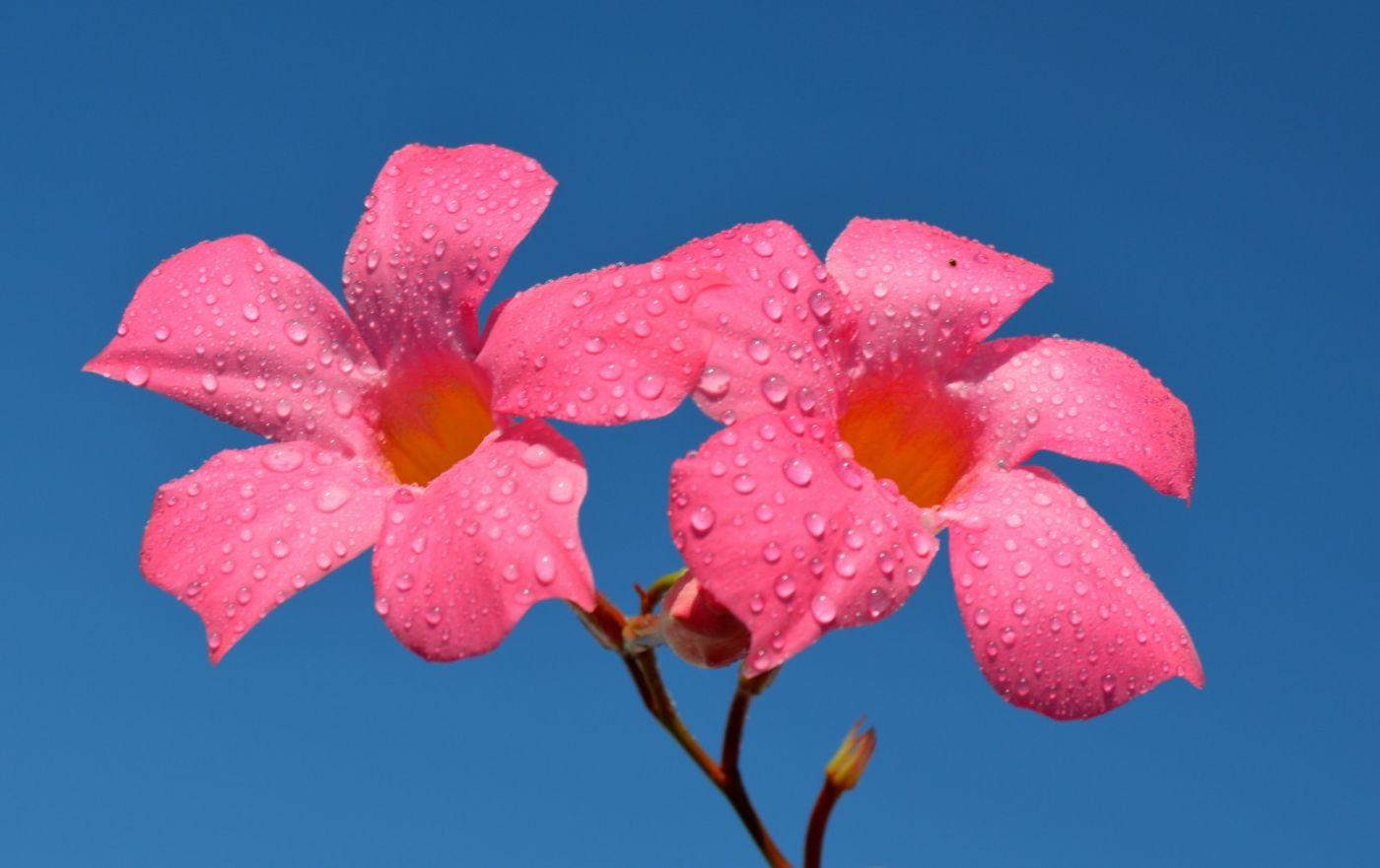 紫蝉和红蝉_图1-23