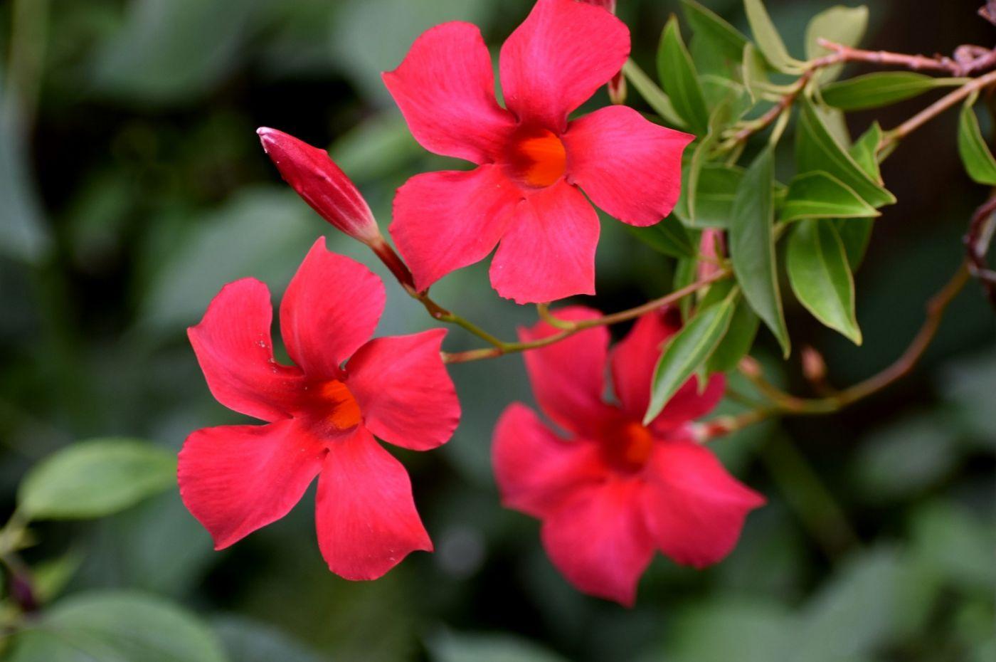 紫蝉和红蝉_图1-24