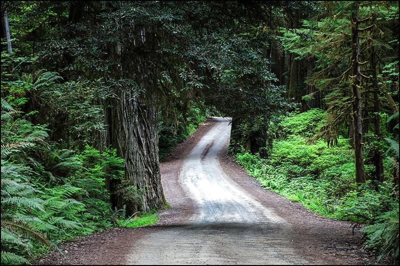 红木国家公园的路_图1-4