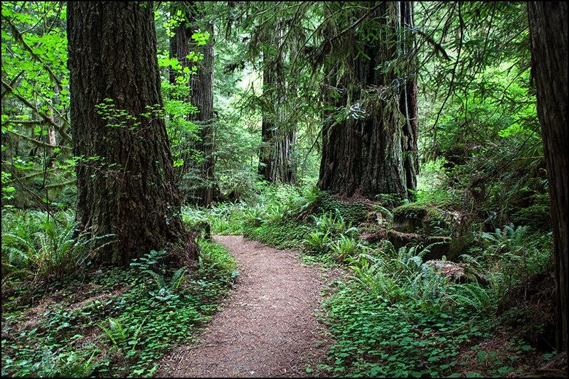 红木国家公园的路_图1-5