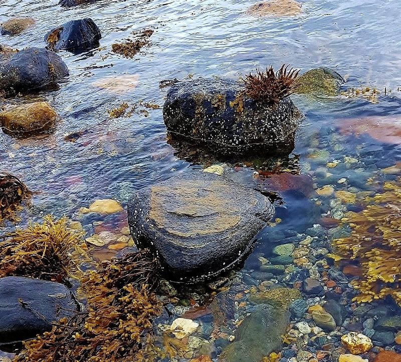 挪威的海边_图1-4