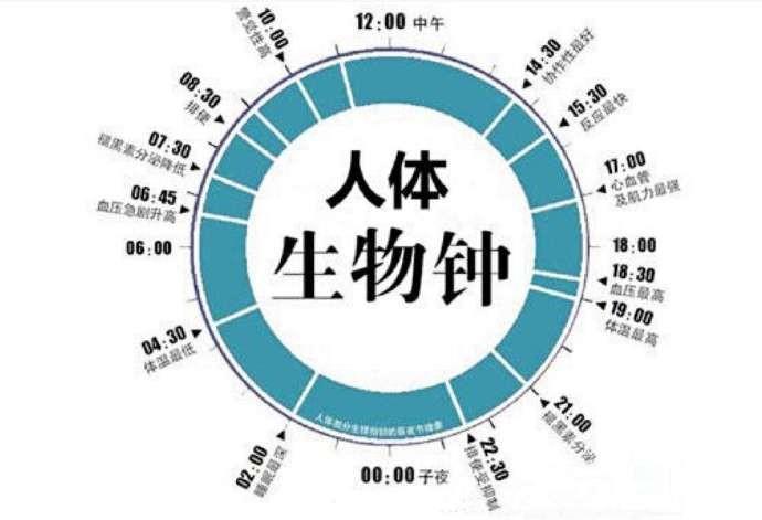 健康大问题:千万注意保护好你的生物钟,按时作息、工作、学习 ..._图1-3