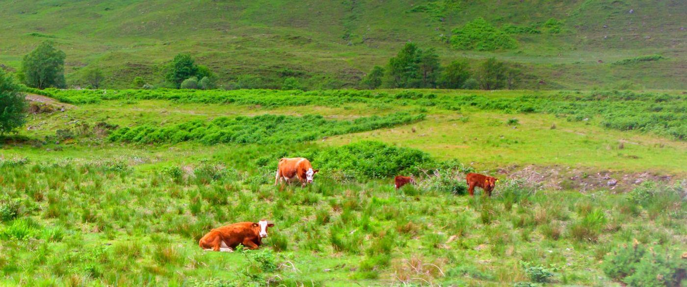 苏格兰见闻,原生态_图1-16