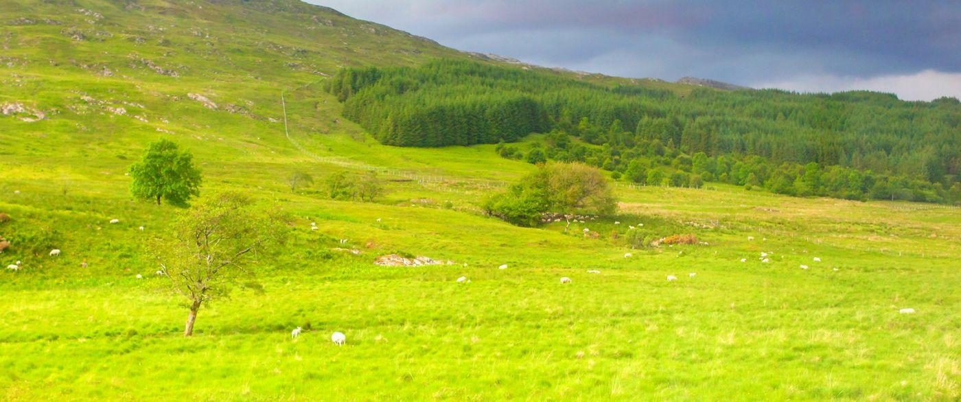 苏格兰见闻,原生态_图1-12