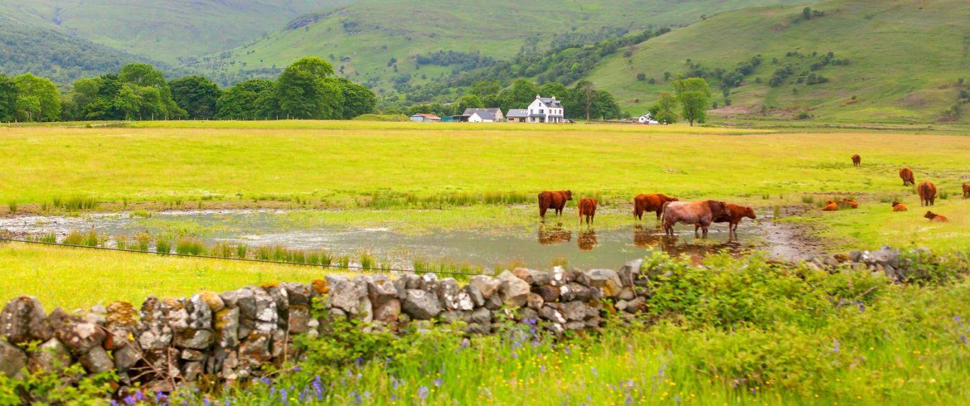 苏格兰见闻,原生态_图1-1