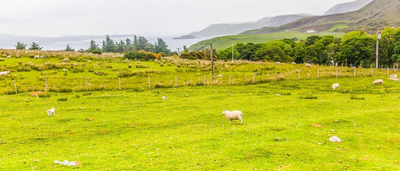 苏格兰见闻,原生态_图1-18