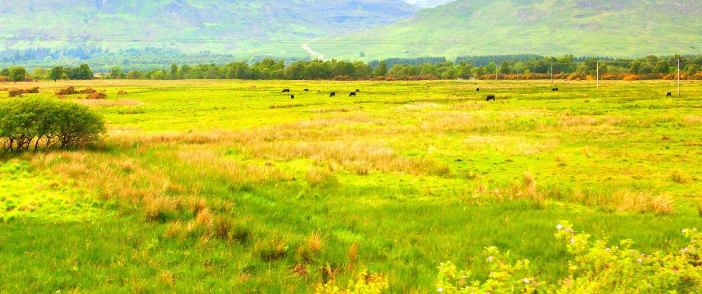 苏格兰见闻,原生态_图1-20