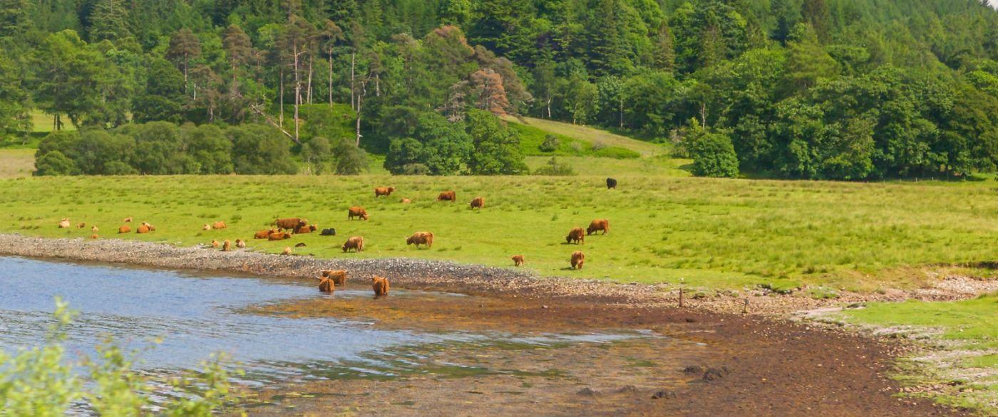 苏格兰见闻,原生态_图1-33