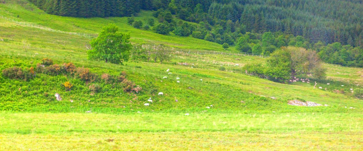 苏格兰见闻,原生态_图1-37