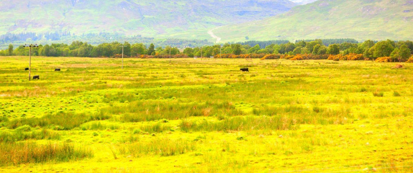 苏格兰见闻,原生态_图1-38