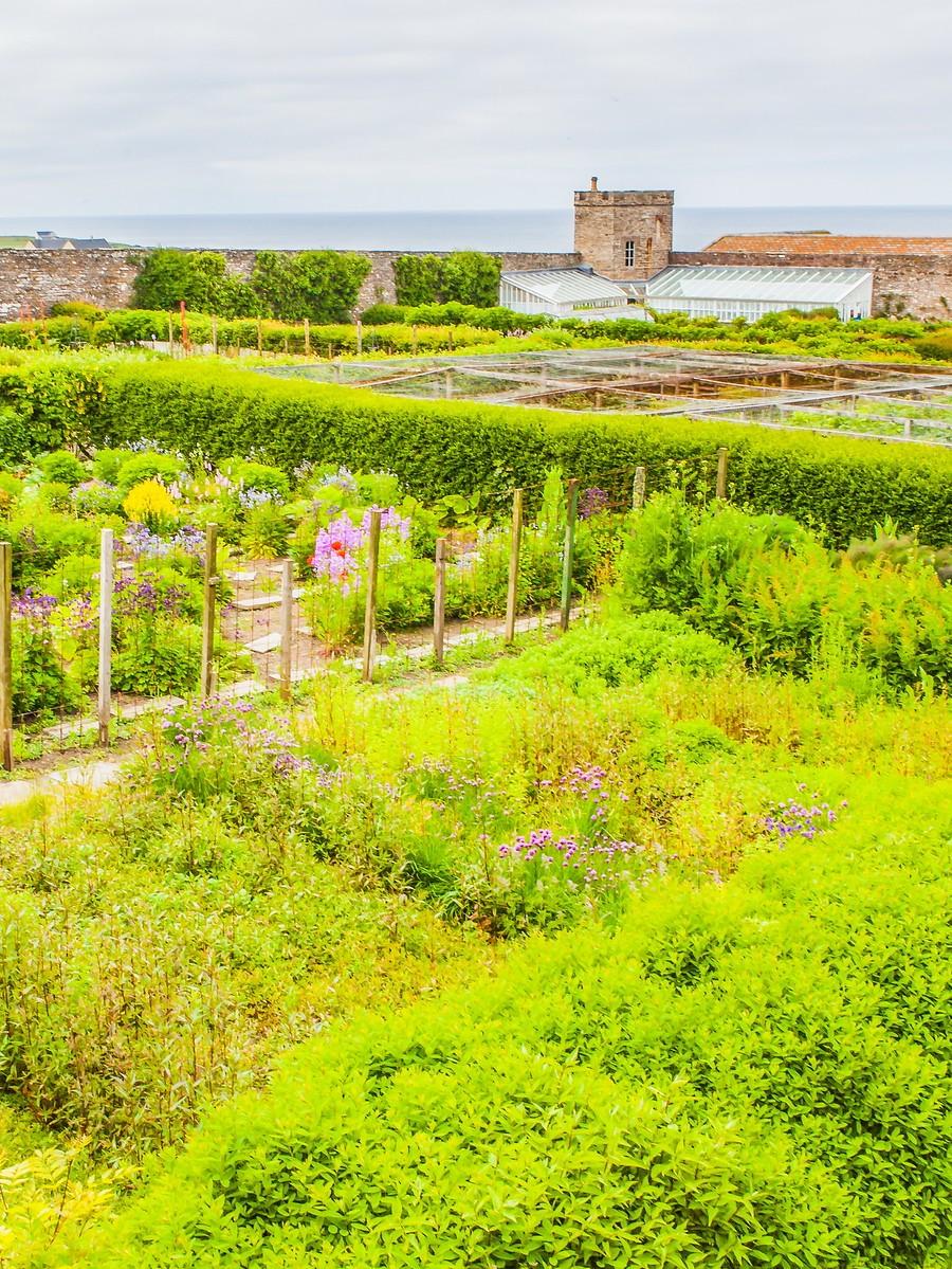 苏格兰梅城堡(Castle of Mey),花园散步_图1-6