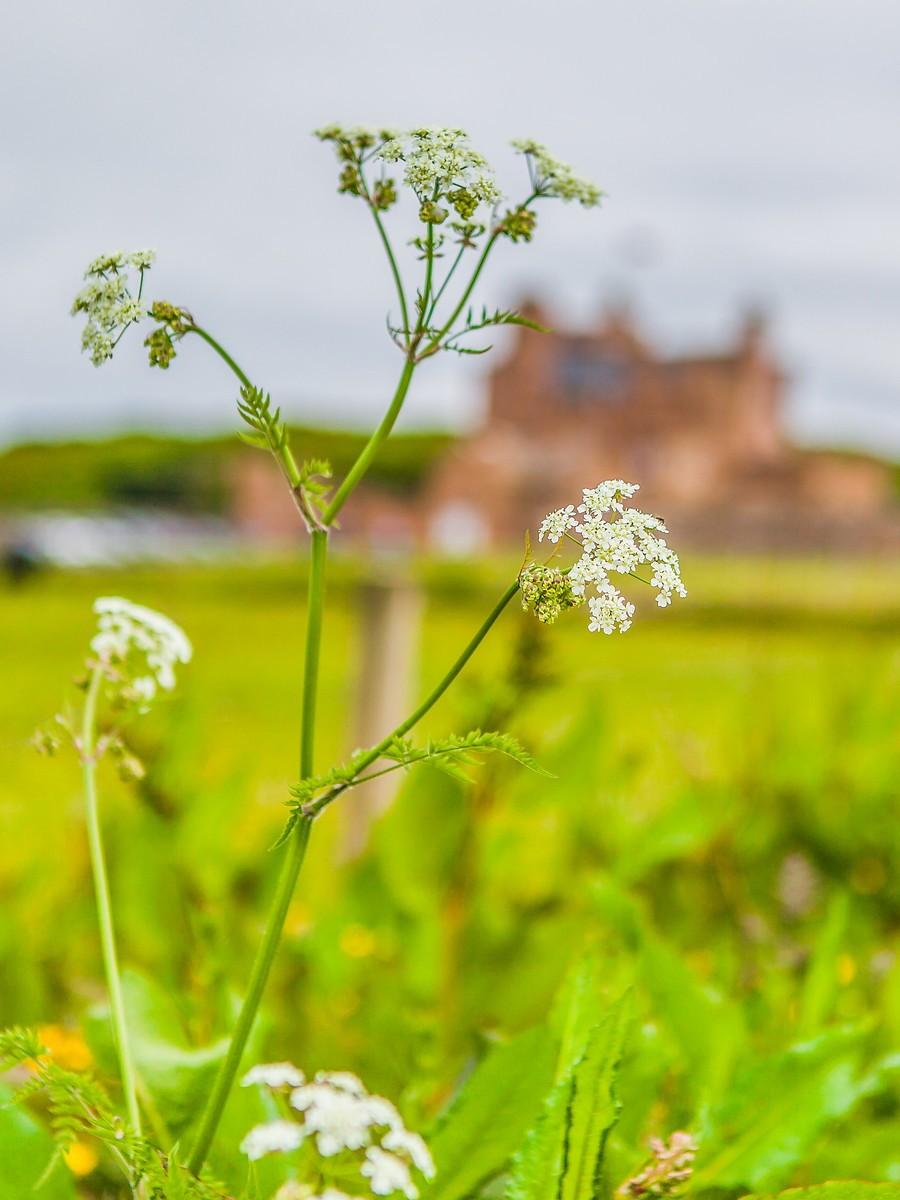 苏格兰梅城堡(Castle of Mey),花园散步_图1-14