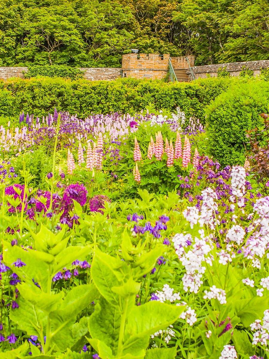 苏格兰梅城堡(Castle of Mey),花园散步_图1-19