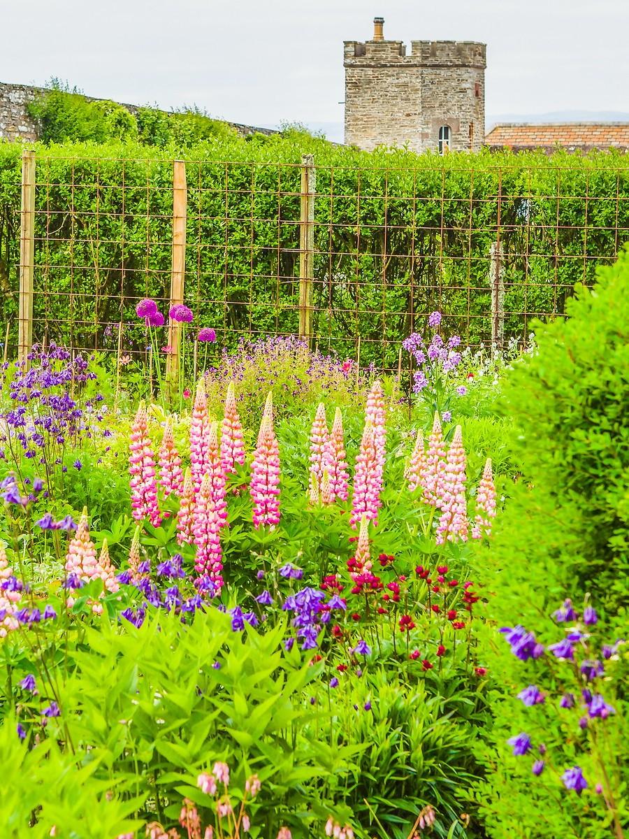 苏格兰梅城堡(Castle of Mey),花园散步_图1-25