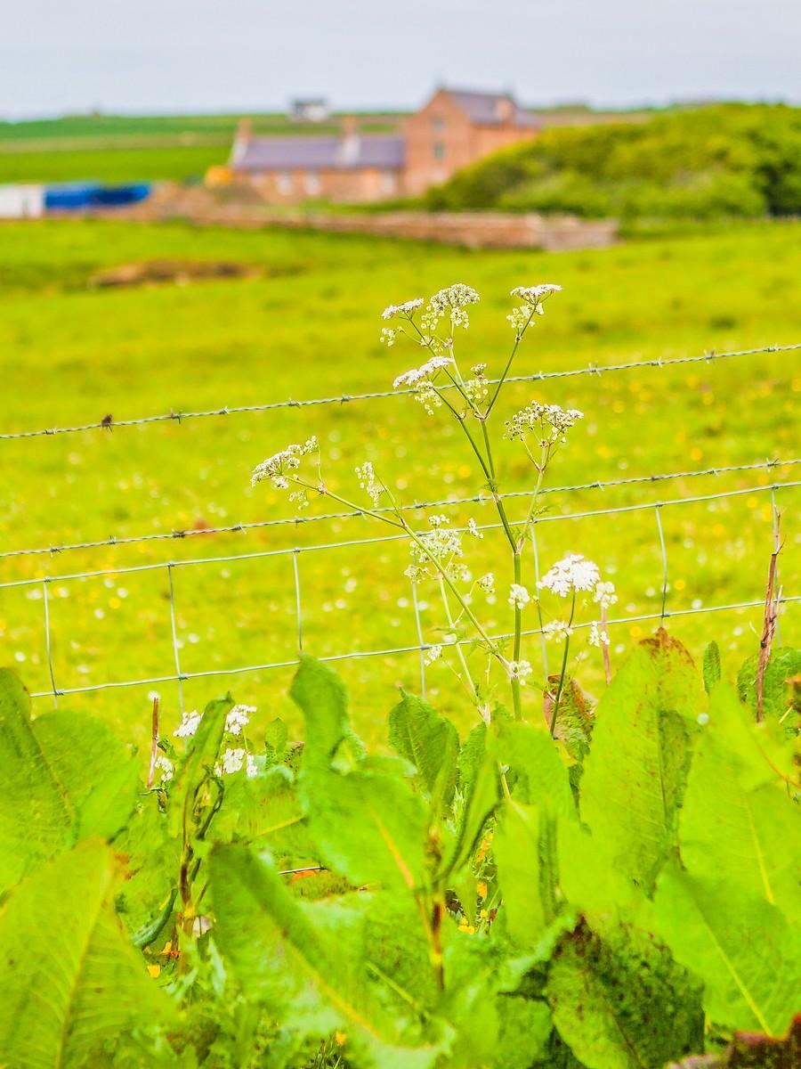 苏格兰梅城堡(Castle of Mey),花园散步_图1-30