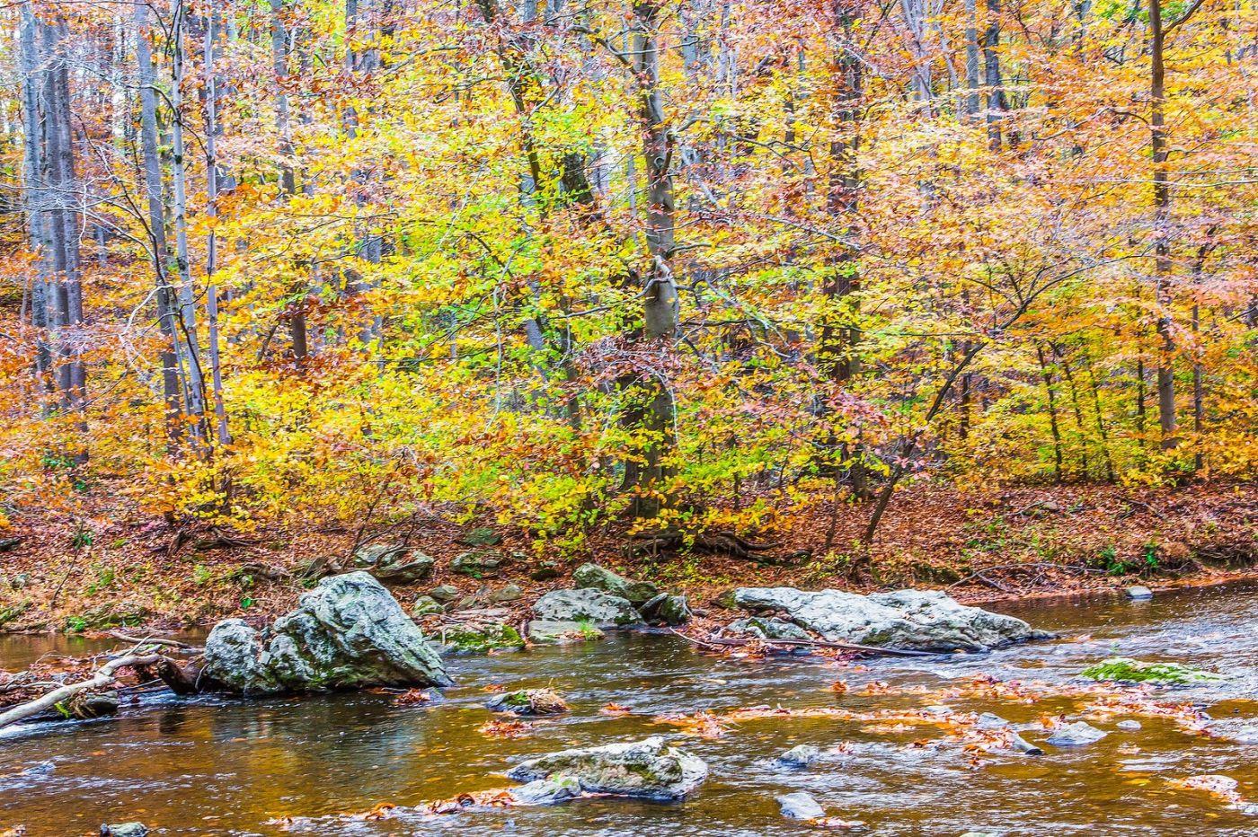 宾州雷德利克里克公园(Ridley creek park),迷人的秋色_图1-27