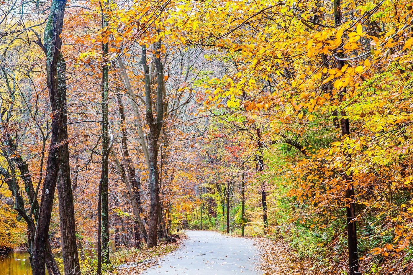 宾州雷德利克里克公园(Ridley creek park),迷人的秋色_图1-26