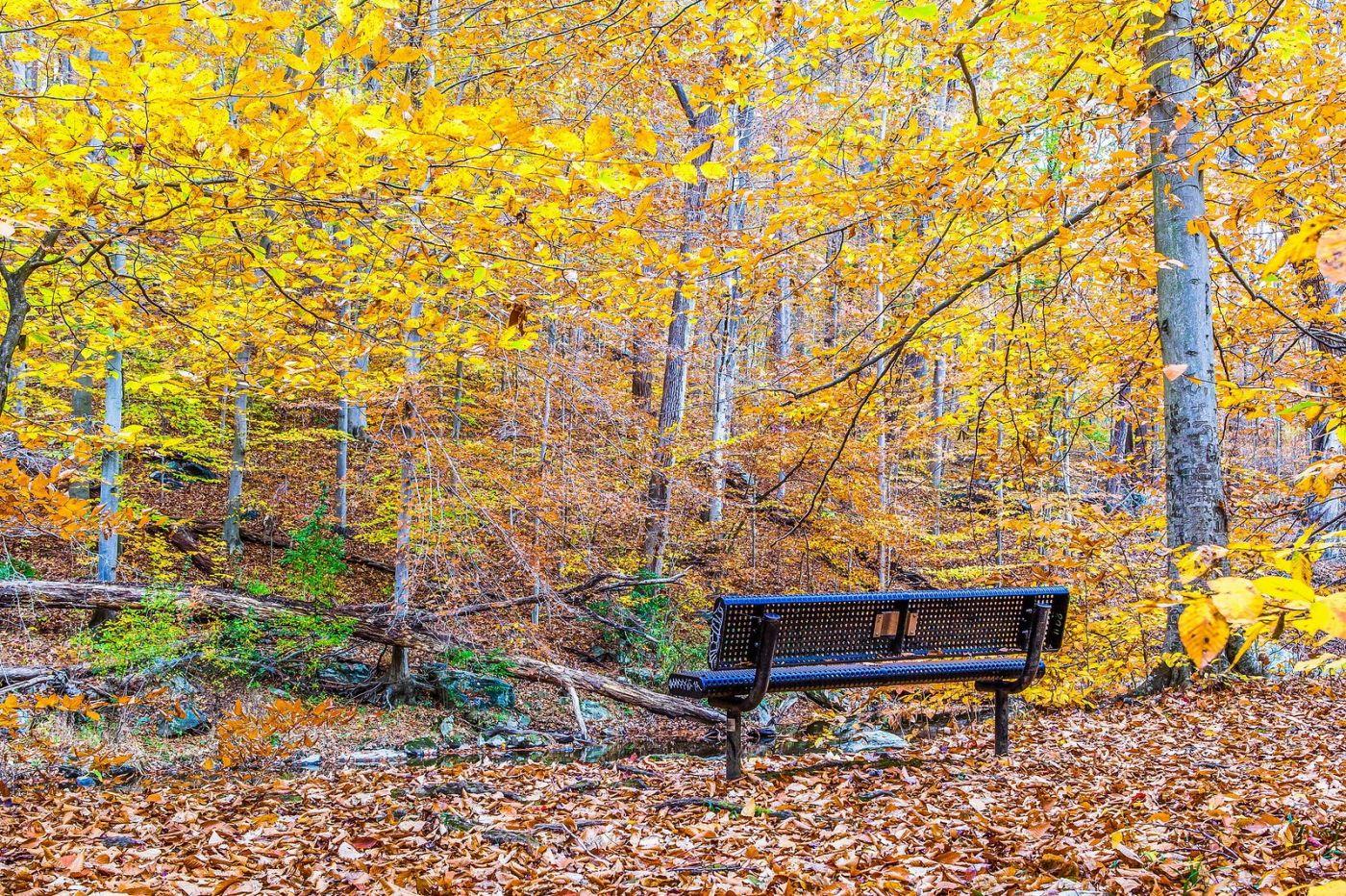宾州雷德利克里克公园(Ridley creek park),迷人的秋色_图1-24
