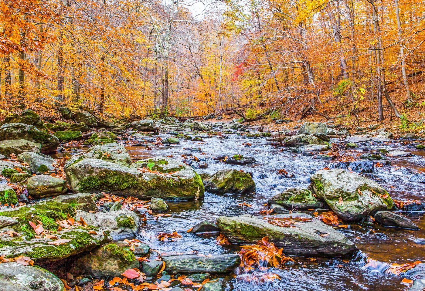 宾州雷德利克里克公园(Ridley creek park),迷人的秋色_图1-22