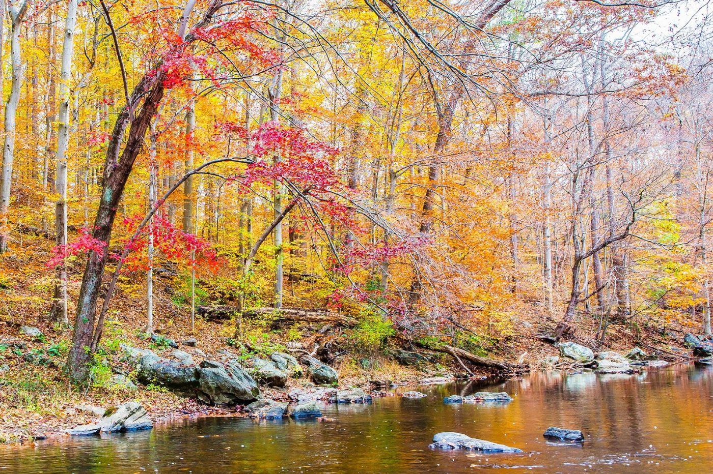 宾州雷德利克里克公园(Ridley creek park),迷人的秋色_图1-17