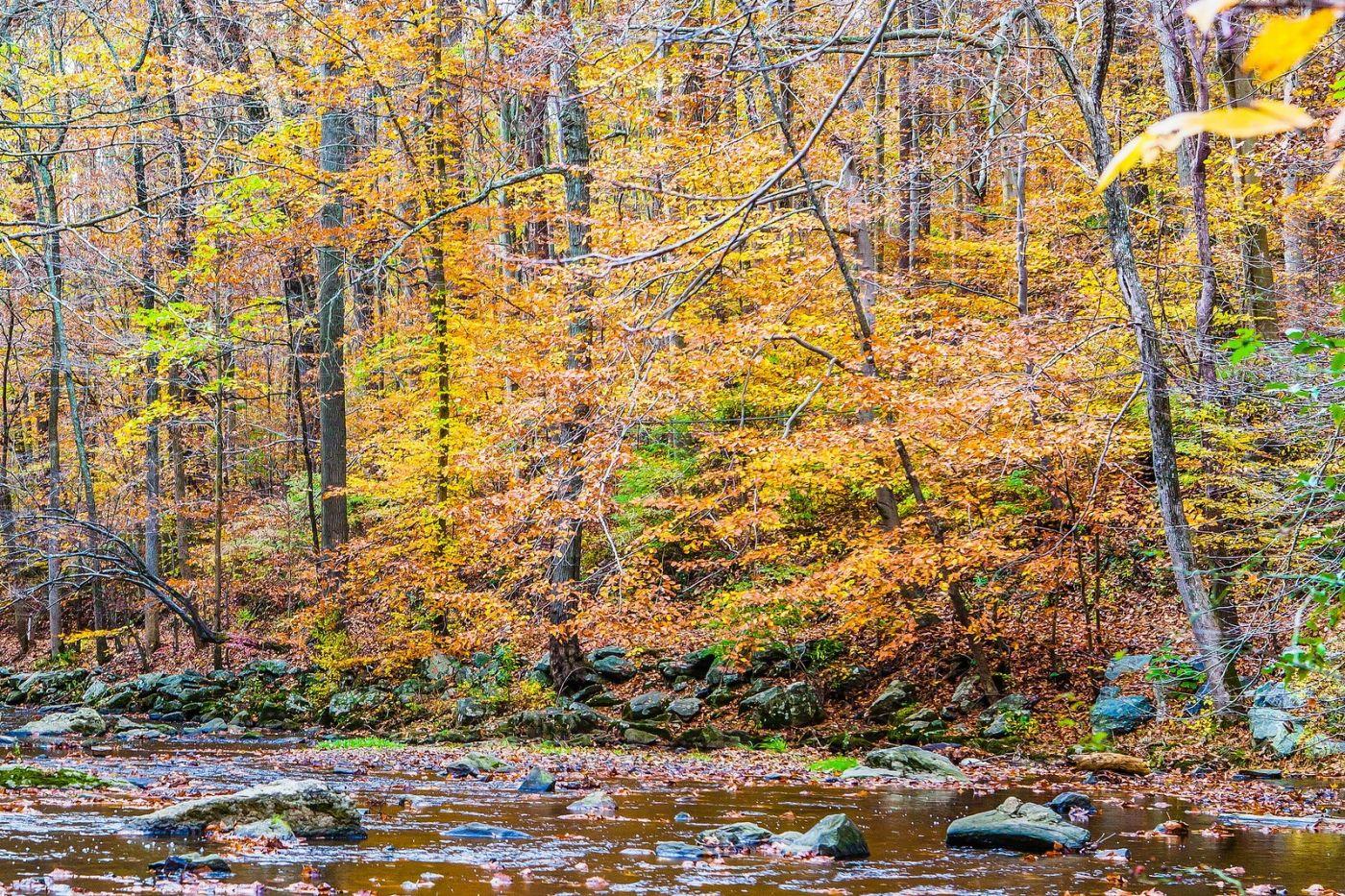 宾州雷德利克里克公园(Ridley creek park),迷人的秋色_图1-19