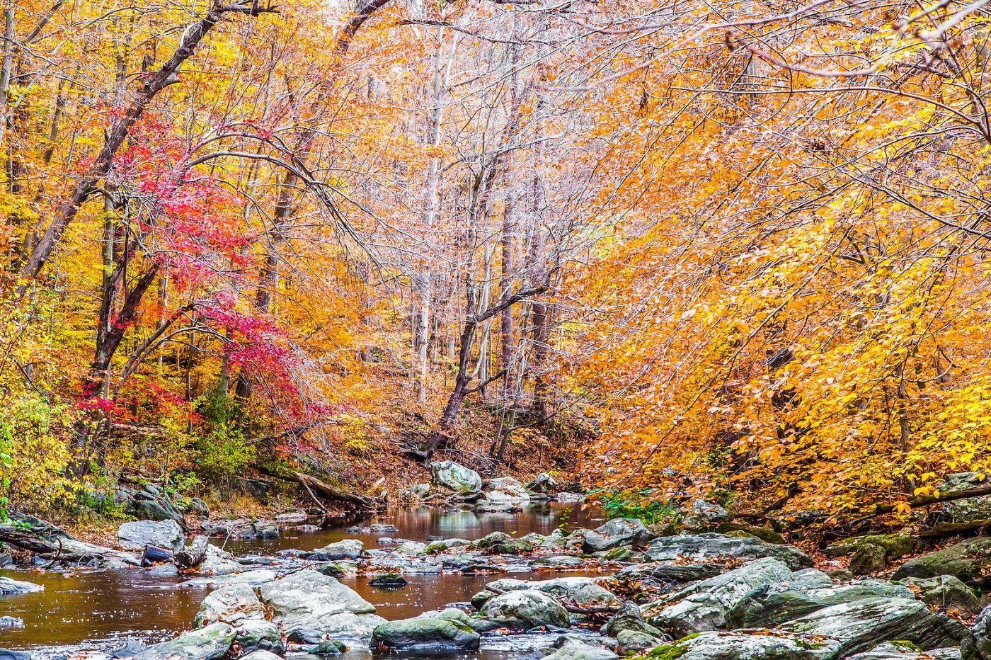 宾州雷德利克里克公园(Ridley creek park),迷人的秋色_图1-20