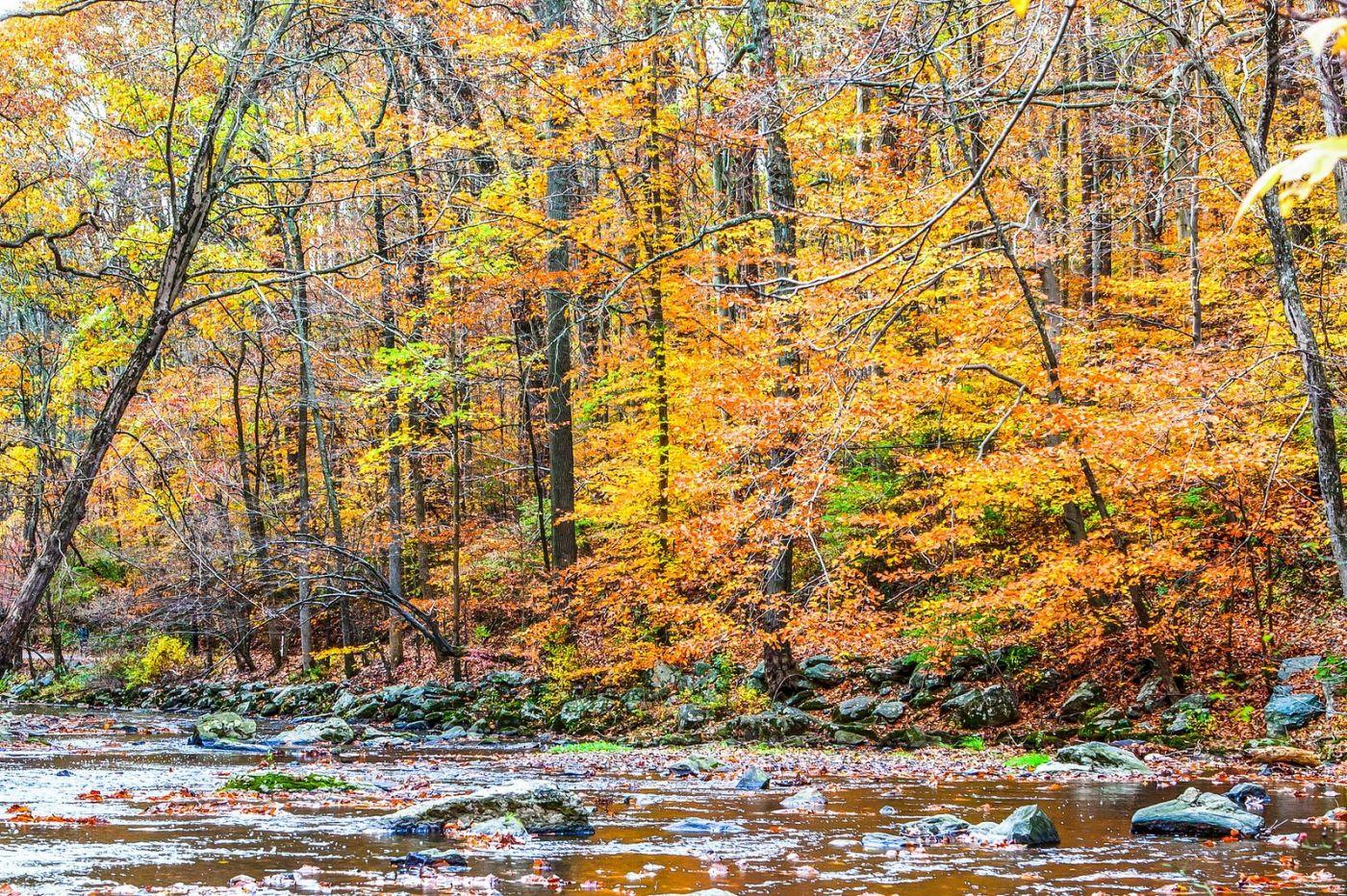 宾州雷德利克里克公园(Ridley creek park),迷人的秋色_图1-16