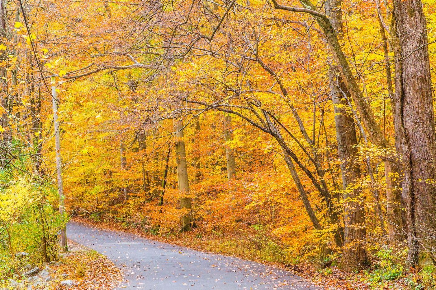 宾州雷德利克里克公园(Ridley creek park),迷人的秋色_图1-15