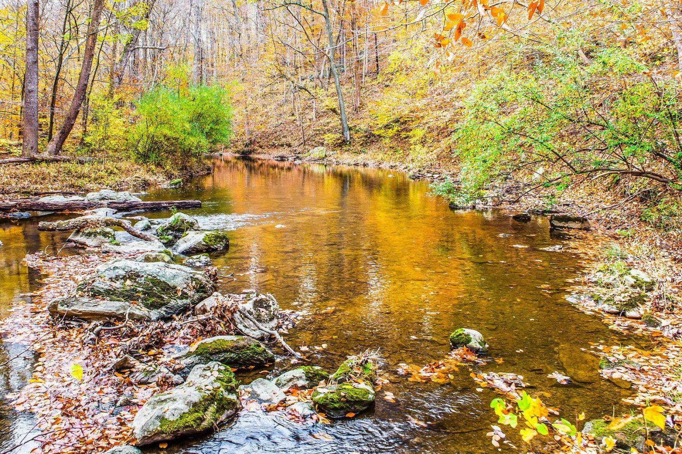 宾州雷德利克里克公园(Ridley creek park),迷人的秋色_图1-13