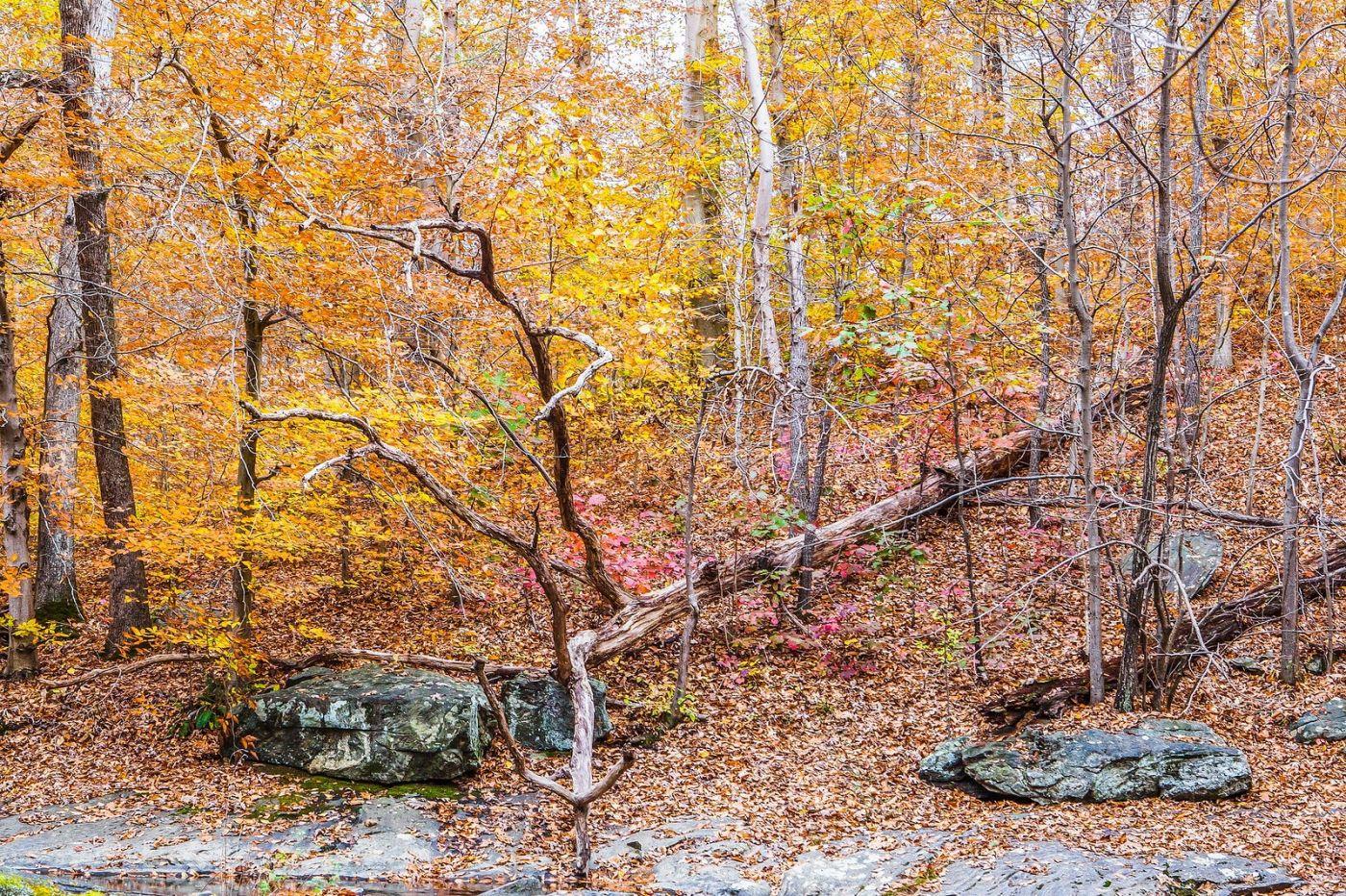 宾州雷德利克里克公园(Ridley creek park),迷人的秋色_图1-9
