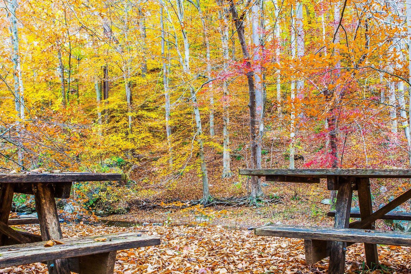 宾州雷德利克里克公园(Ridley creek park),迷人的秋色_图1-11