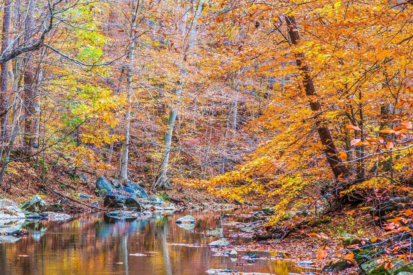 宾州雷德利克里克公园(Ridley creek park),迷人的秋色_图1-8