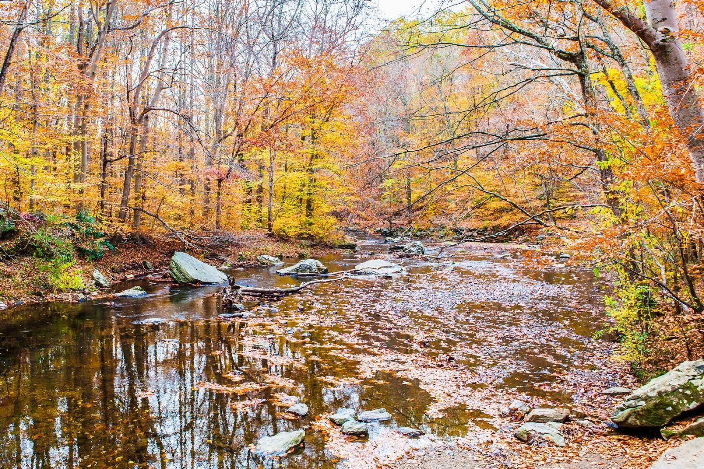宾州雷德利克里克公园(Ridley creek park),迷人的秋色_图1-6