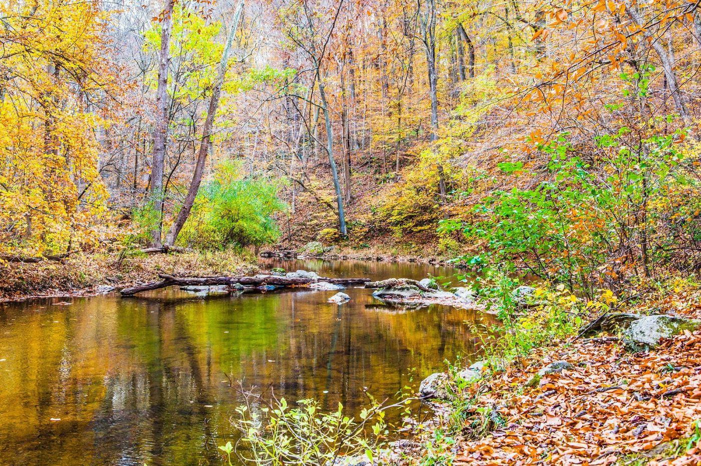 宾州雷德利克里克公园(Ridley creek park),迷人的秋色_图1-5