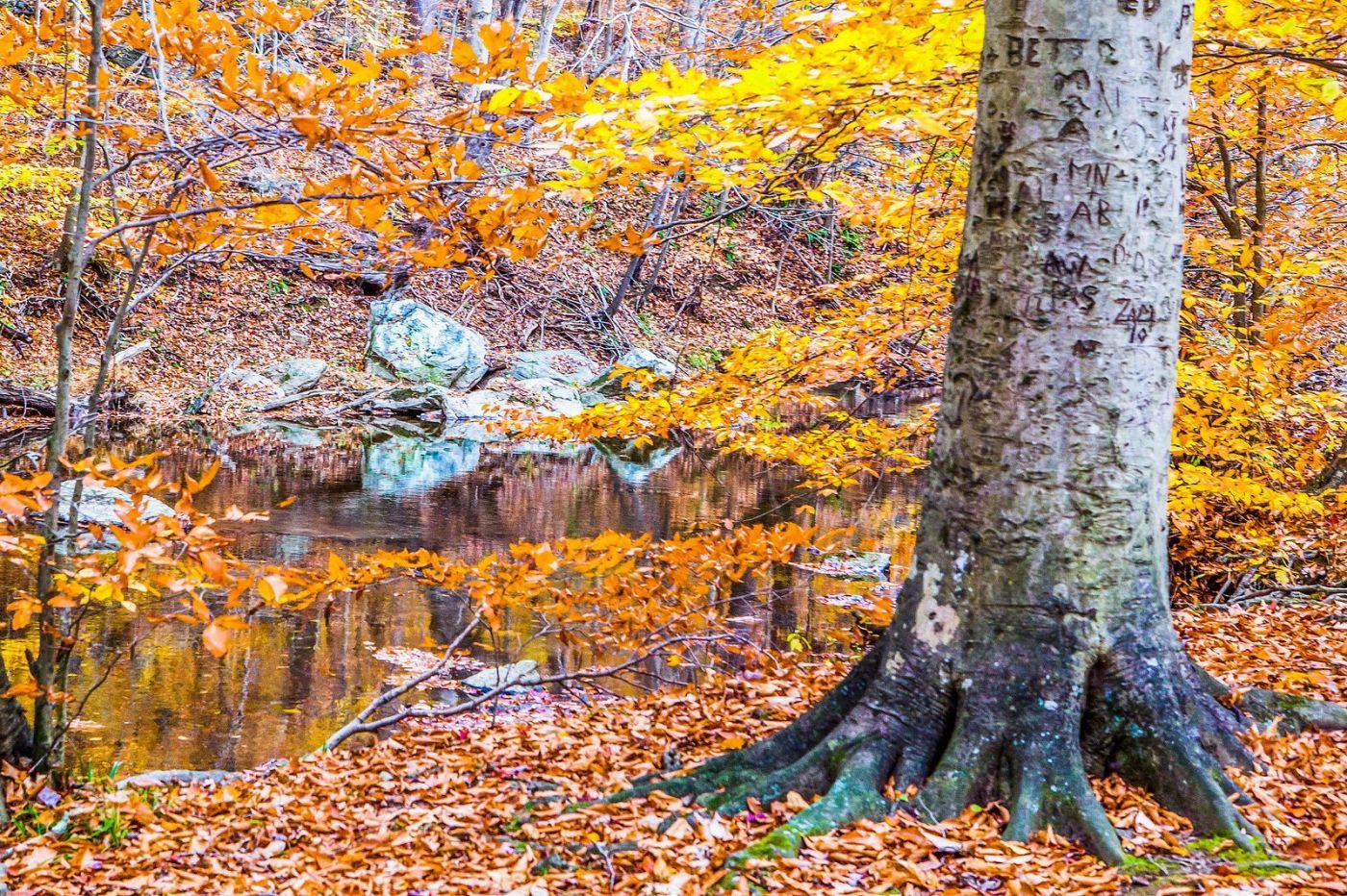 宾州雷德利克里克公园(Ridley creek park),迷人的秋色_图1-3