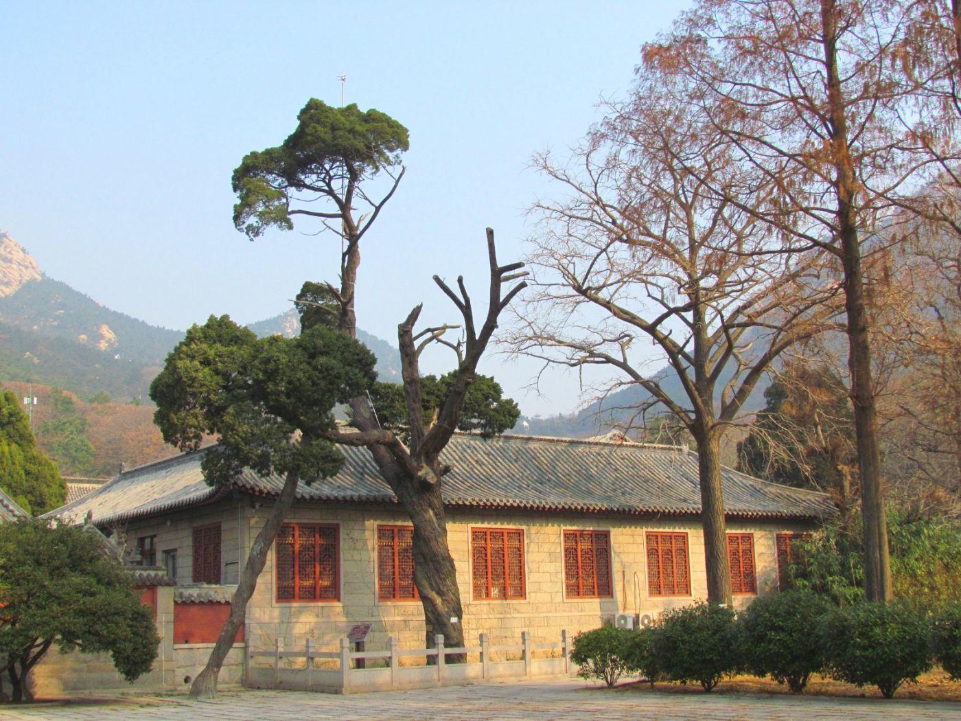古刹、老树、红叶_图1-9