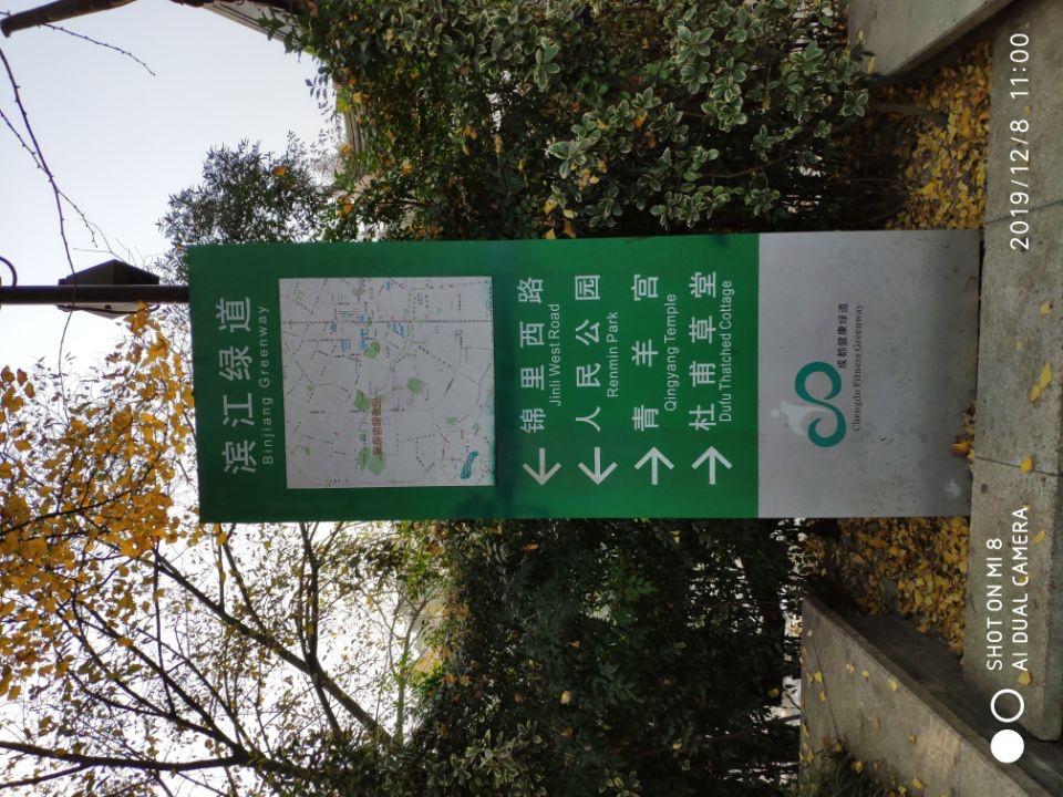 成都滨江西路与百花潭公园的银杏树_图1-1