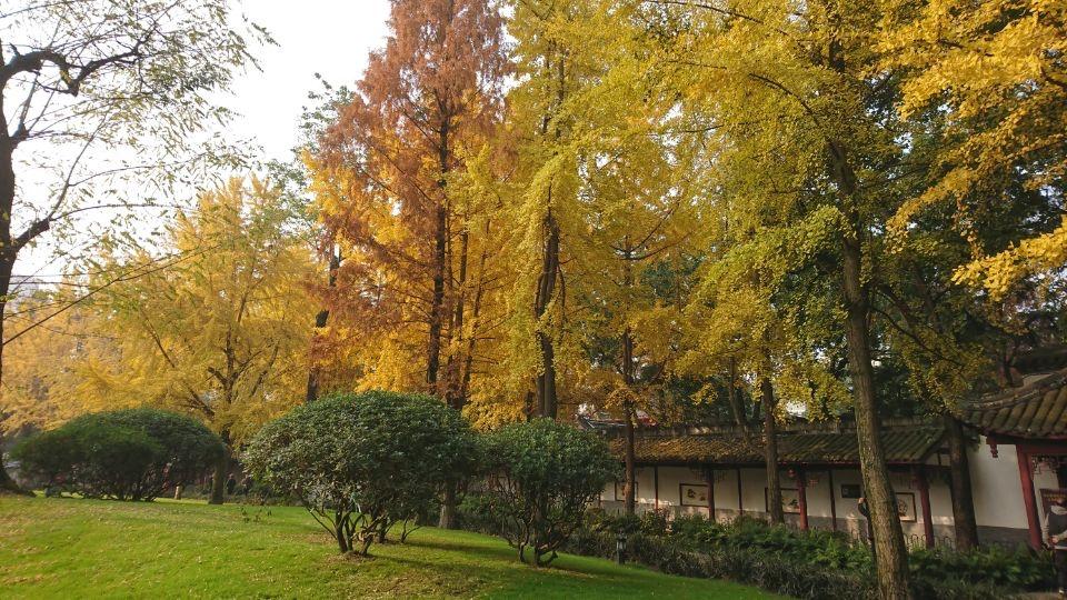 银杏树-2_图1-2