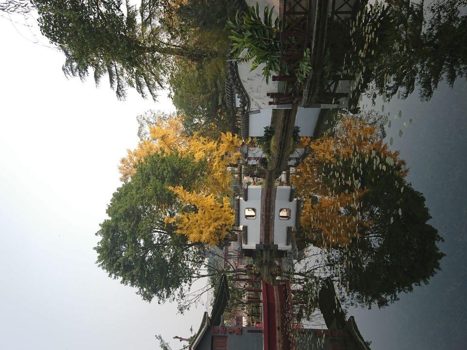 银杏树-2_图1-9