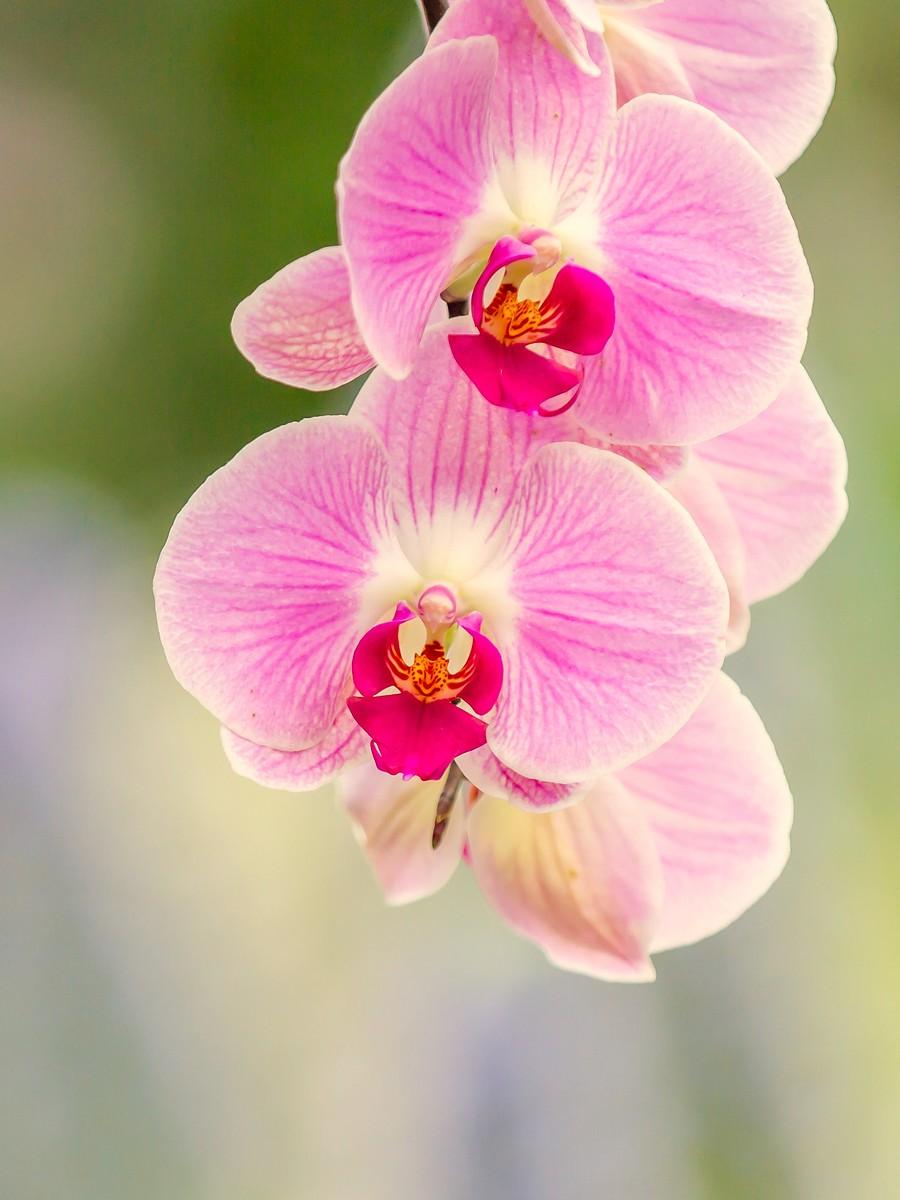 兰花,多姿多彩_图1-1