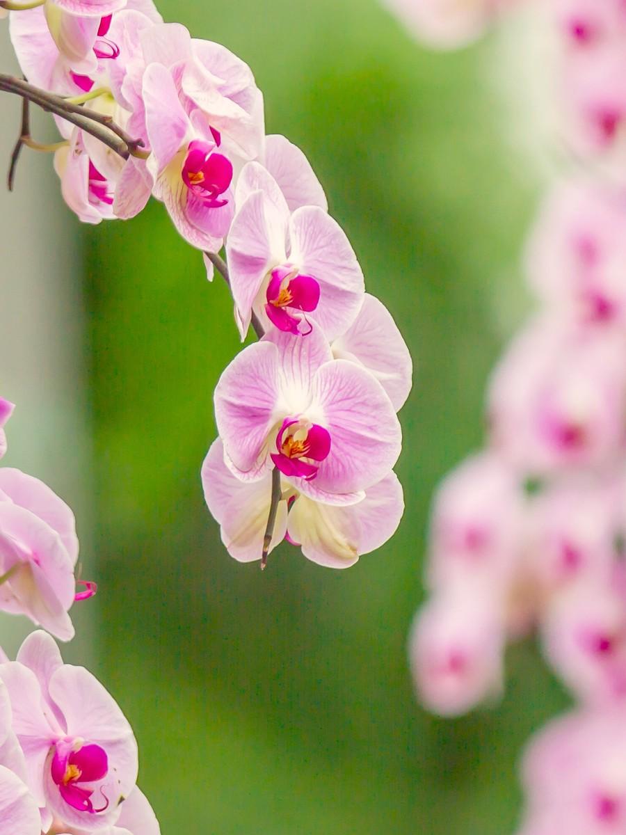 兰花,多姿多彩_图1-12