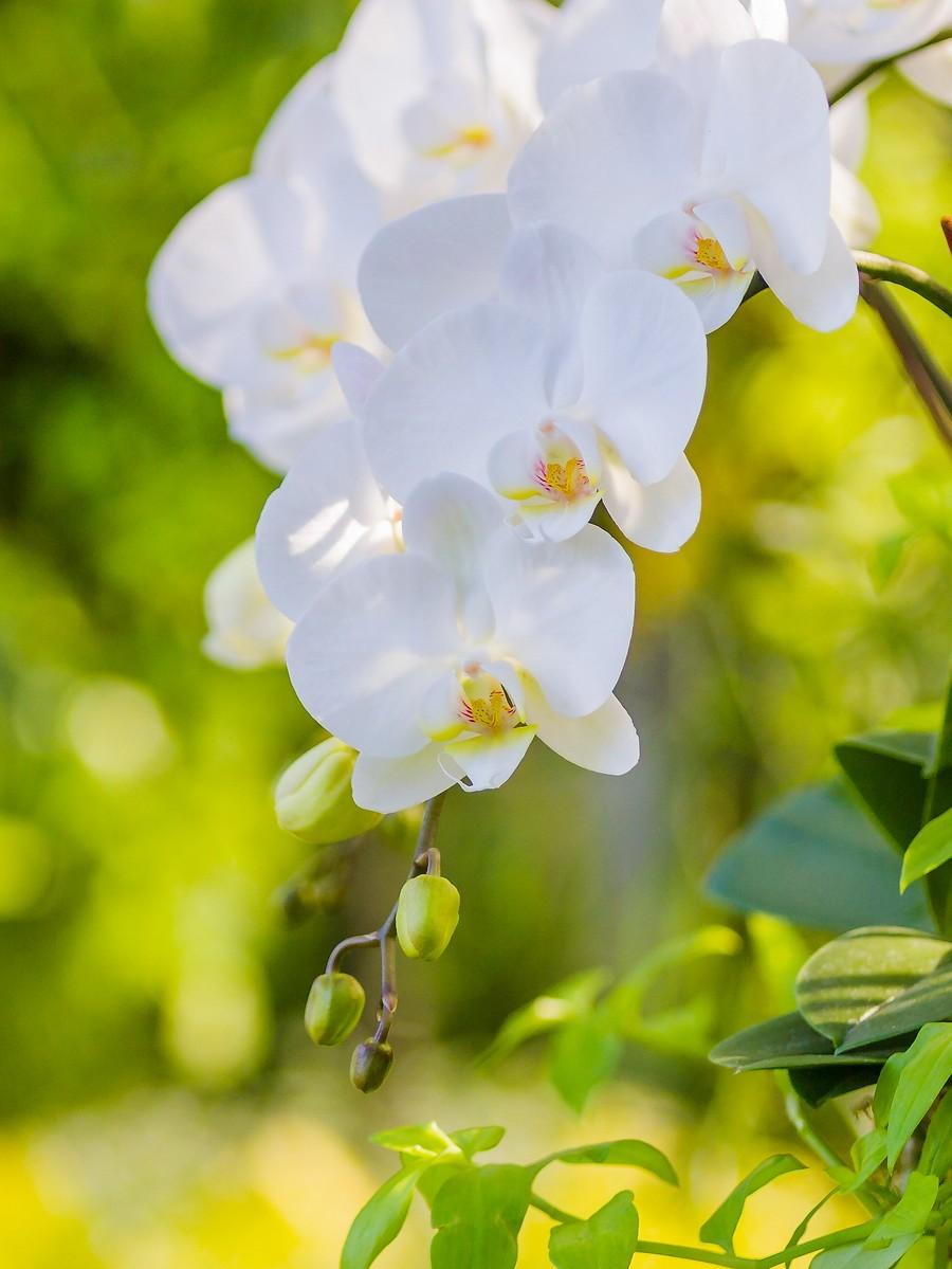 兰花,多姿多彩_图1-20