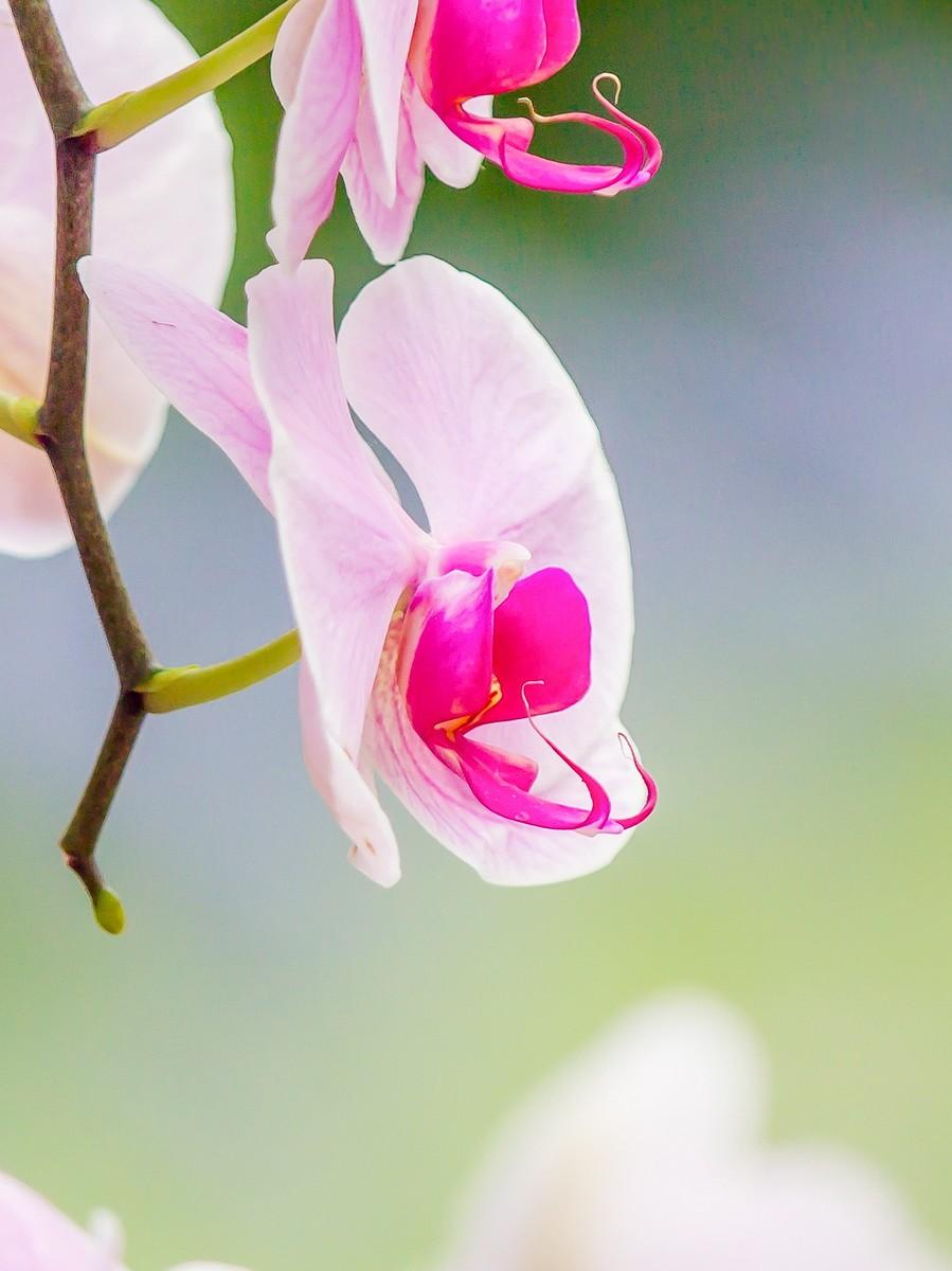 兰花,多姿多彩_图1-23