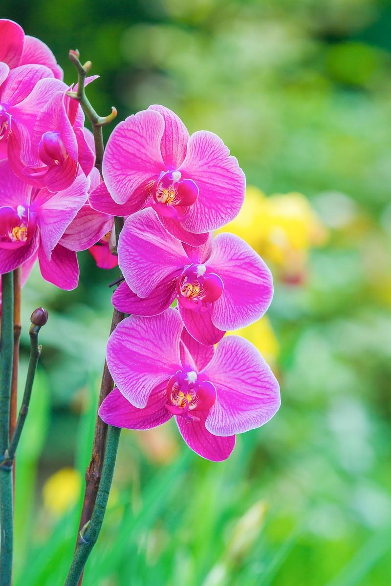 兰花,多姿多彩_图1-22