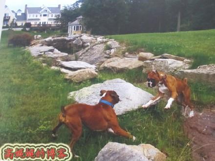 高娓娓:活的不如狗?美国的狗狗住别墅有专人服务游戏室受高等教育 ..._图1-1