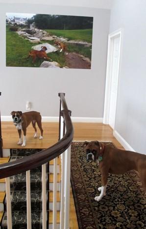 高娓娓:活的不如狗?美国的狗狗住别墅有专人服务游戏室受高等教育 ..._图1-2